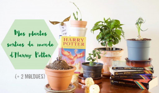 Mes plantes sorties du monde d'Harry Potter