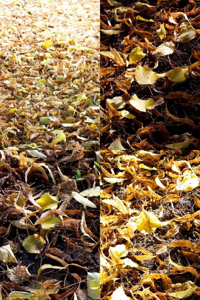montage-automne