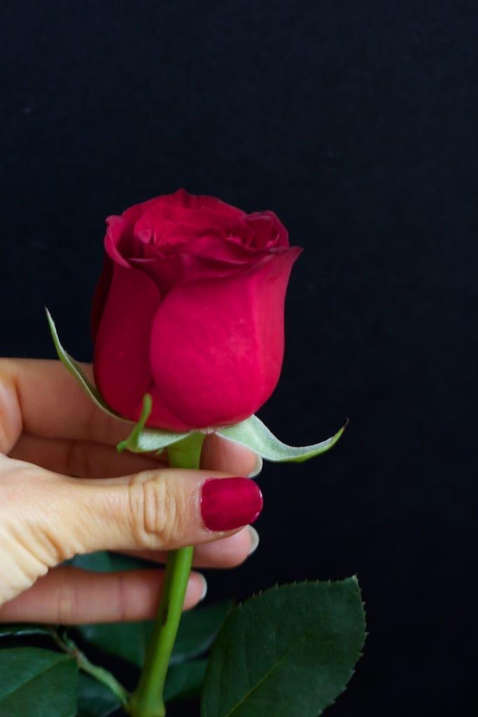 rose-femme-v1-IMG_2661