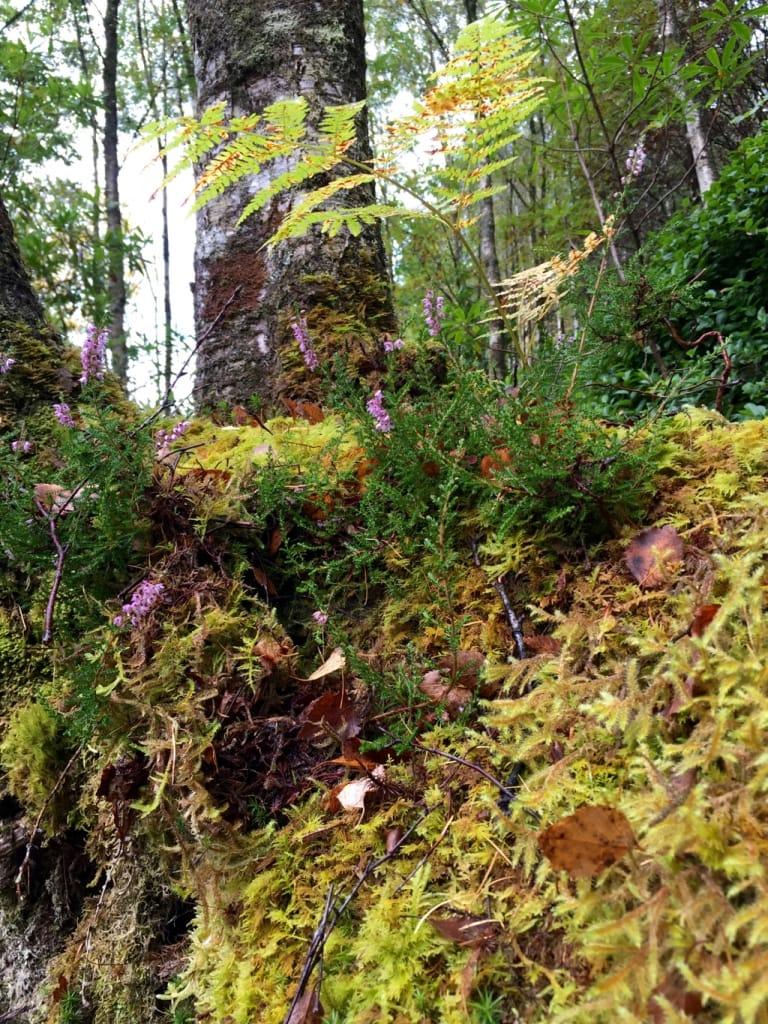 mousse et flore ecossaisse
