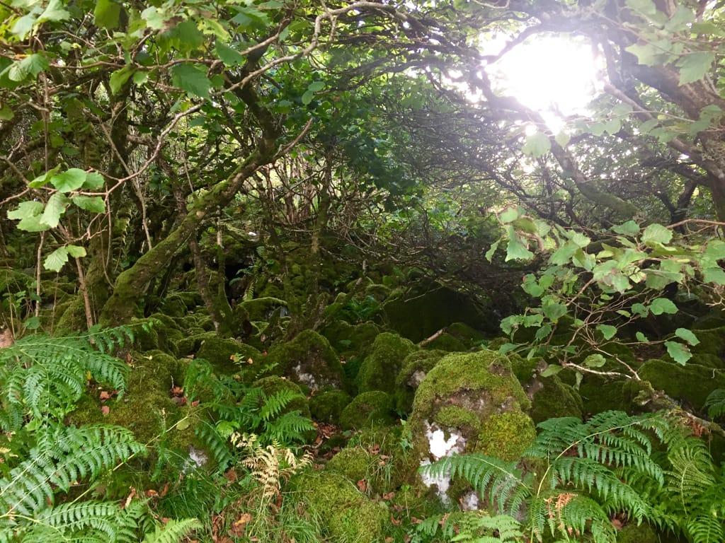 puits de lumiere ecosse