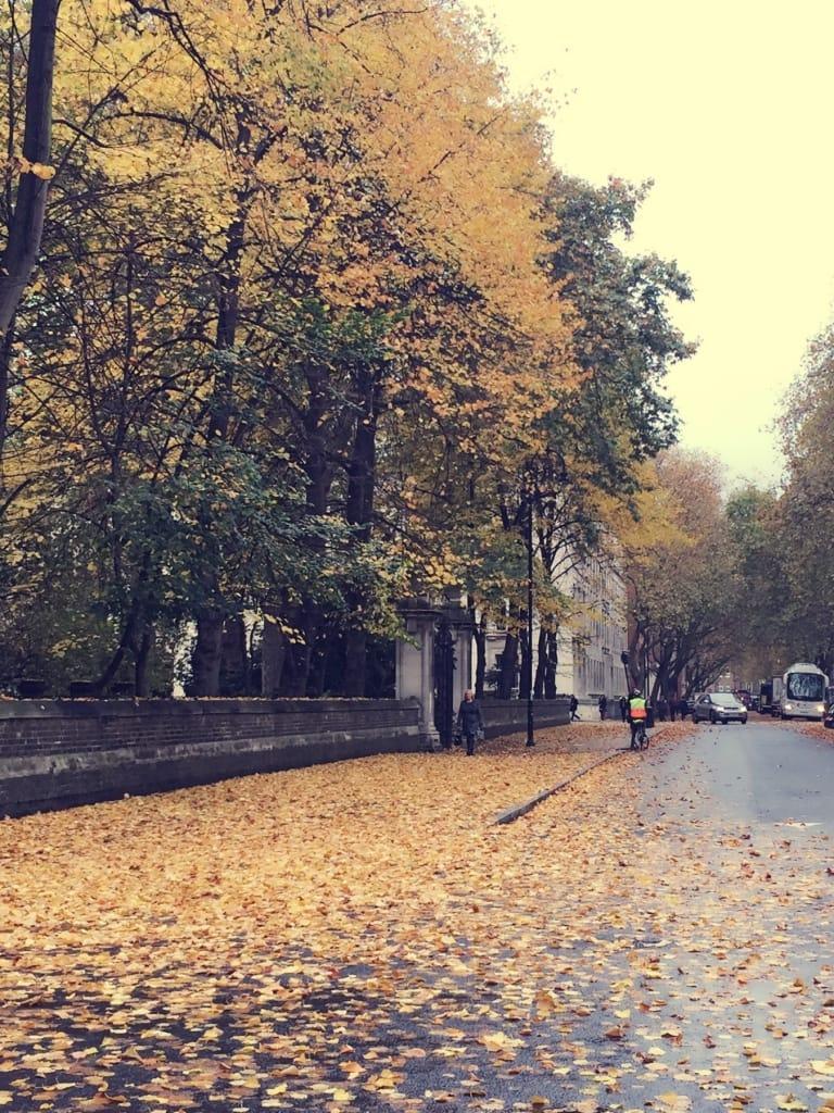 london street automn leafs